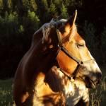 Sylvia Morar Profile Picture